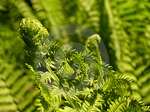 Fern Growth II Stock Images