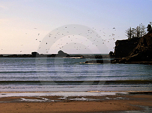 Flock of Birds Over Sunset Bay Royalty Free Stock Photo