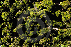 Texture: Moss Wall Stock Photo