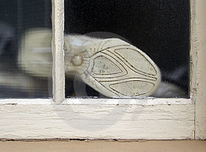 Window To The Sole Stock Photography - Image: 7302