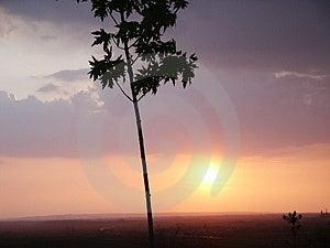 Заход солнца дерева Стоковое Изображение RF