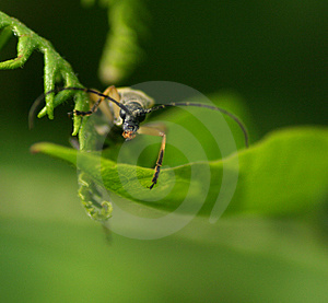 BUG! Stock Image - Image: 8091