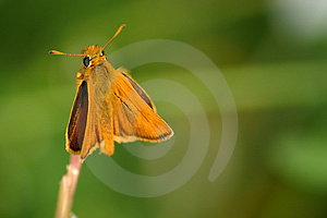 Butterfly Royalty Free Stock Photo - Image: 8105