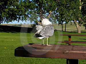 Bird Cleaning Itself Royalty Free Stock Images - Image: 9319