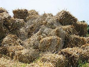 Straw mountain stock photo. Image of bale, harvest, agro - 9494