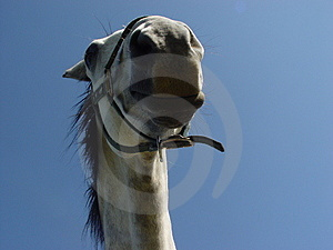 White Horse 1 Royalty Free Stock Photography - Image: 9777