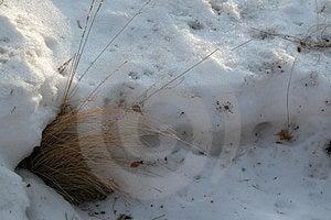 Gramas Do Inverno Foto de Stock Royalty Free - Imagem: 10935