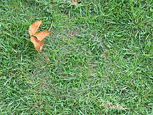 Dry Leaf On Green Grass Stock Images - Image: 12734