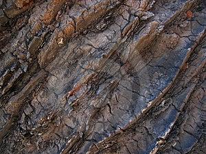 Palmowa Tekstura Zdjęcia Stock - Obraz: 13253