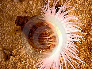 Sea Life Stock Image - Image: 13321