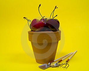 Potted Cherries Stock Photo - Image: 13360