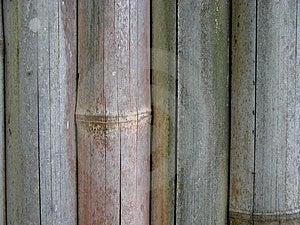 Bamboo Fence Stock Images - Image: 13784