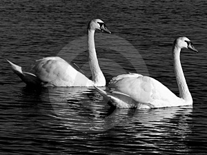 Two's Company Royalty Free Stock Photography - Image: 15527