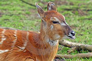 Deer Royalty Free Stock Images - Image: 15569