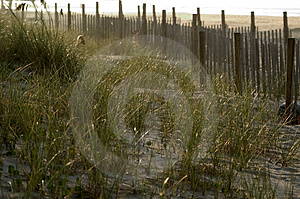 Fence In The Dunes  Stock Photo - Image: 15600