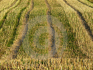Stubble Field 1 Stock Images - Image: 15654