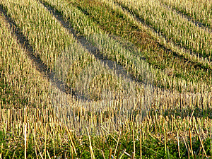 Stubble Field 2 Royalty Free Stock Photos - Image: 15658