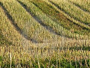 Stubble Field 2 Royalty Free Stock Photos - Image: 15658