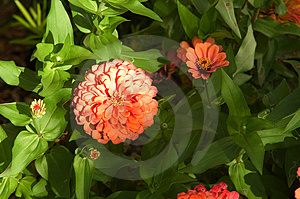 Garden Blooms  Stock Photos - Image: 15753