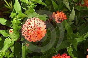 Garden Blooms  Stock Photos - Image: 15753