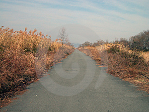 Road In The Dusk Royalty Free Stock Photography - Image: 16417
