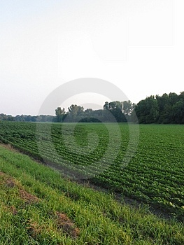 August Beans-057 Royalty Free Stock Photography - Image: 16517