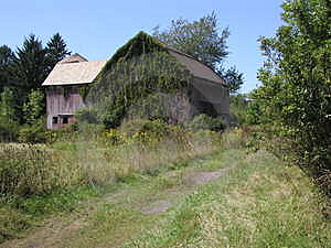 Ivy covered barn Royalty Free Stock Photos