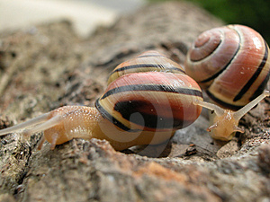 Following Mollusk Stock Photos - Image: 17013