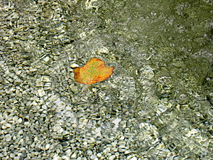 Leaf In Wirlpool Royalty Free Stock Photography - Image: 17117