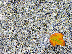 Leaf In Shallow Water Royalty Free Stock Photos - Image: 17118
