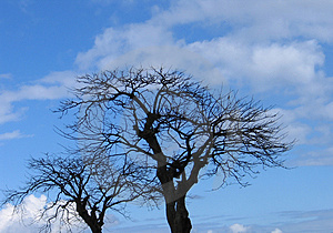 Dead Trees Royalty Free Stock Photography - Image: 17777