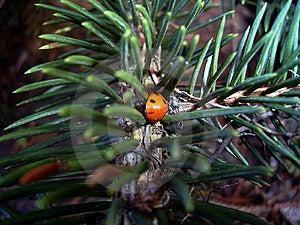 Ladybird Stock Photos - Image: 18013