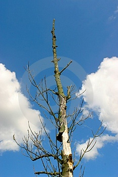 Dead tree stock image. Image of wood, alone, spiritless - 19401