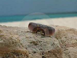 Krab Shell Stock Foto's