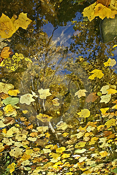 Reflections Royalty Free Stock Photography - Image: 19927