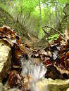 Small waterfall through leaves Royalty Free Stock Photo