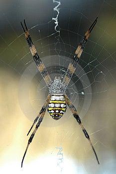 Spider On Webb Stock Photo