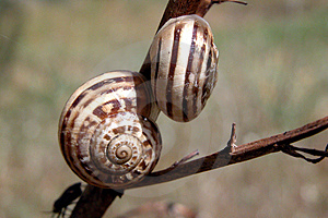 Snail Free Stock Images