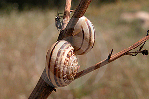 Snails And  A Friend Free Stock Photos
