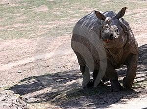 Rhino Free Stock Photos