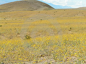 The Flowers In Desert Free Stock Photography