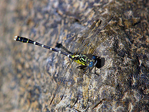 Dragonfly Free Stock Photo