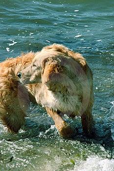 Cane che gira intorno sulla spiaggia Immagine Stock