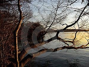 Lake tree Royalty Free Stock Photos