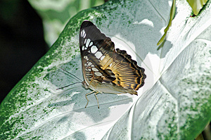 Butterfly on leaf Royalty Free Stock Photography
