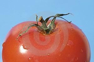 Red Tomato Free Stock Photo