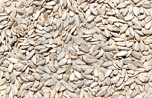 Hulled Raw Sunflower Seeds Stock Images
