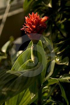 Flor iluminada Imagem de Stock Royalty Free
