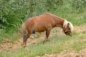 Horse Free Stock Photos