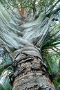 Triangle Palm Stock Photography